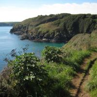 SW7214 : Coast path near Cadgwith