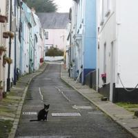 SS4630 : Bude Street, Appledore, Devon (with resident cat)