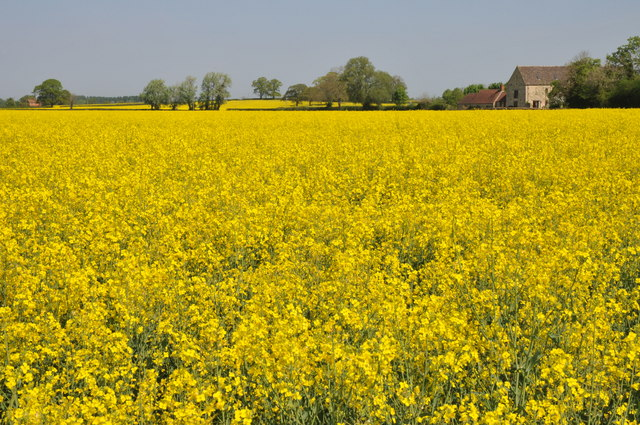 SU0195 : Fields of oilseed rape