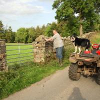SD9897 : One man and his dog near Low Houses