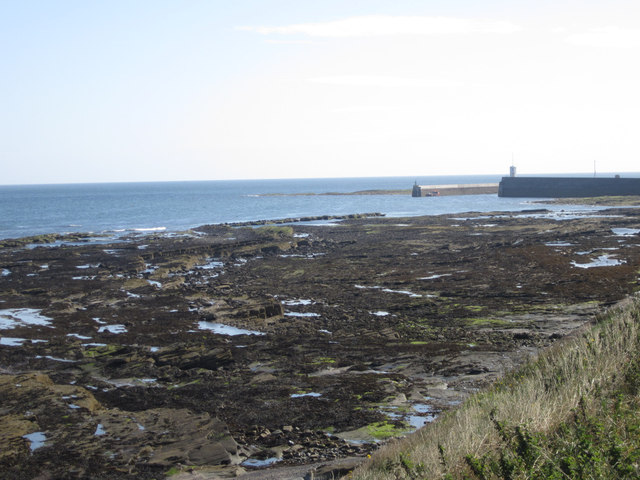 NU2132 : The Tumblers, exposed rocks near Seahouses harbour